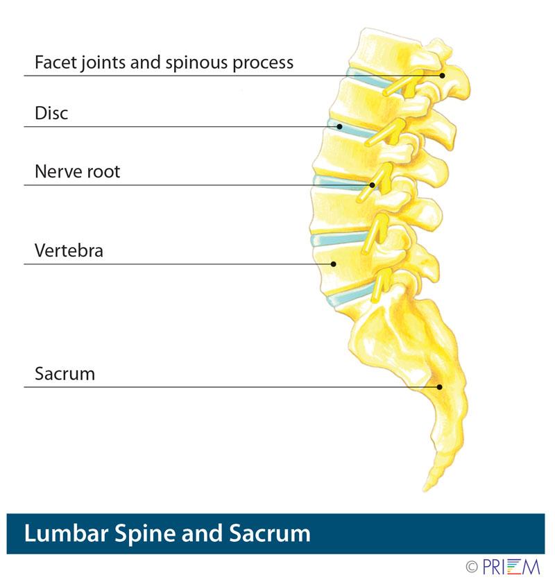 Anatomy of the lumbar spine and sacrum